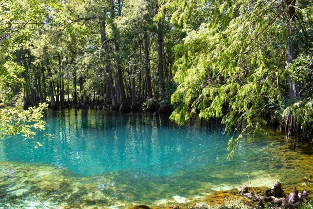 Manatee Springs near Orlando