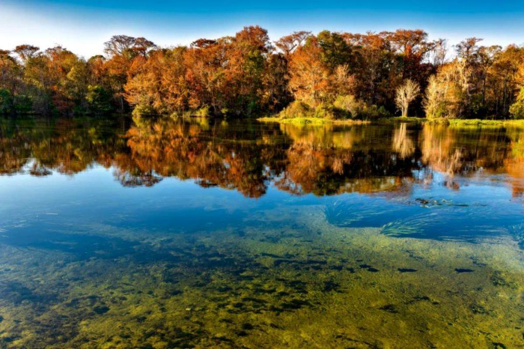 Wakulla Springs State Park, Black Lagoon
